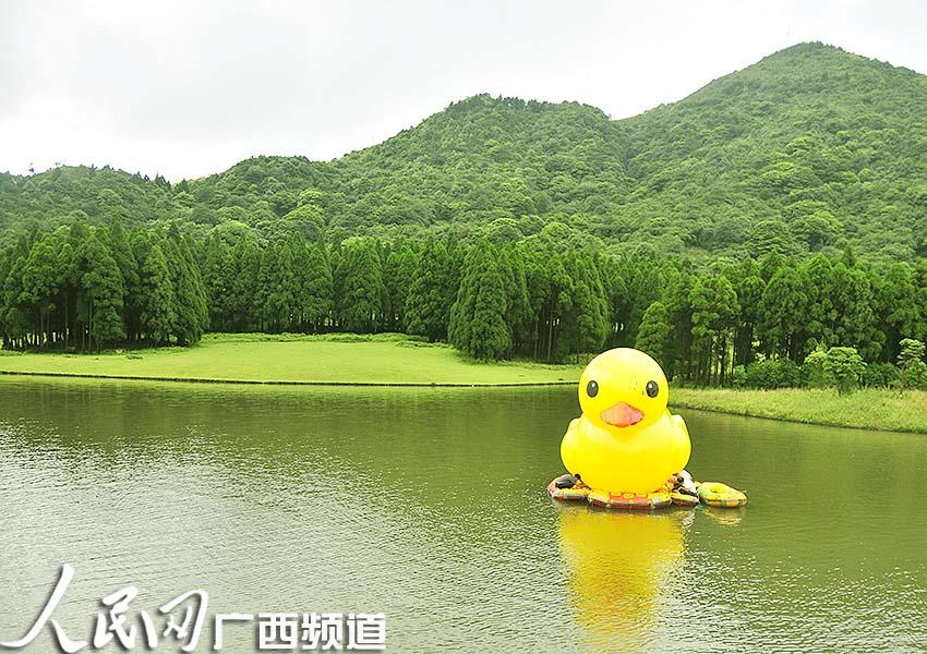 """(记者罗世立)8月26日上午,""""大黄鸭""""现身广西北流市大容山国家森林公园"""