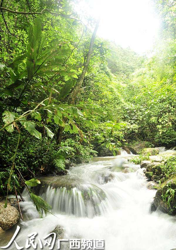 大容山国家森林公园位于广西北流市区北面约20公里处,主峰海拔1275