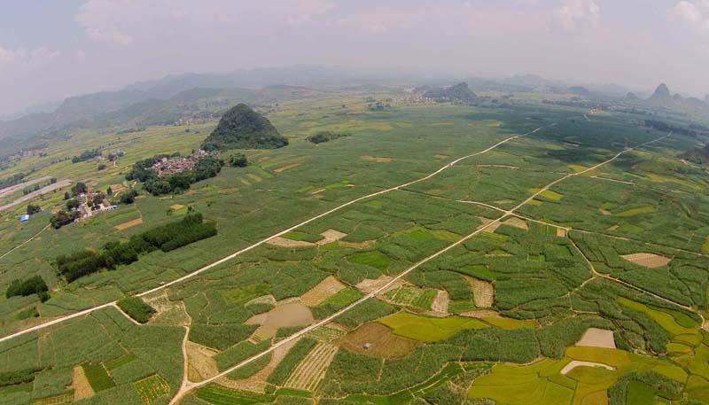 据了解,该县潭头乡是甘蔗主产区,全乡甘蔗种植面积达到2.