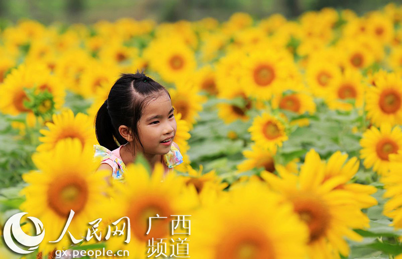 一名小朋友在广西柳州市融安县大良镇西村油葵花海中游玩(谭凯兴/摄)