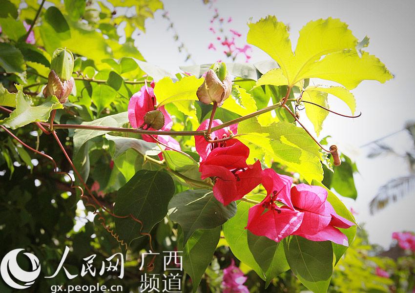 人民网广西频道 广西要闻    人民网桂平10月30日电 (罗世立)10月30日