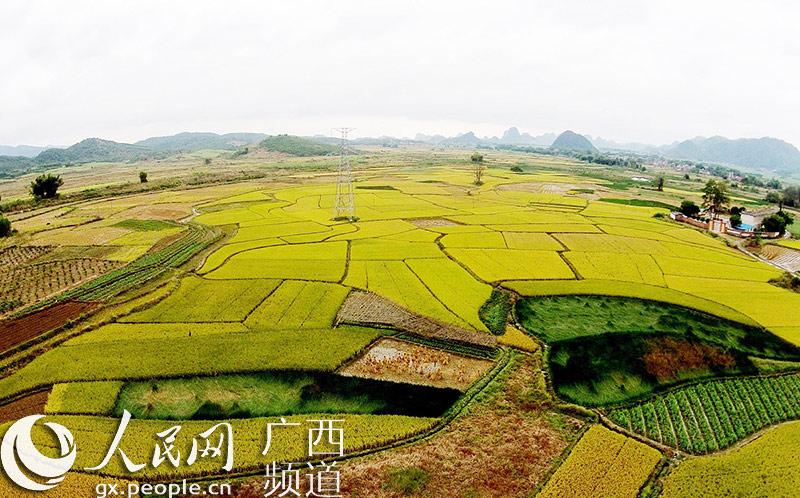 11月8日,在广西柳州市融安县潭头乡新林村航空拍摄的田园风光.