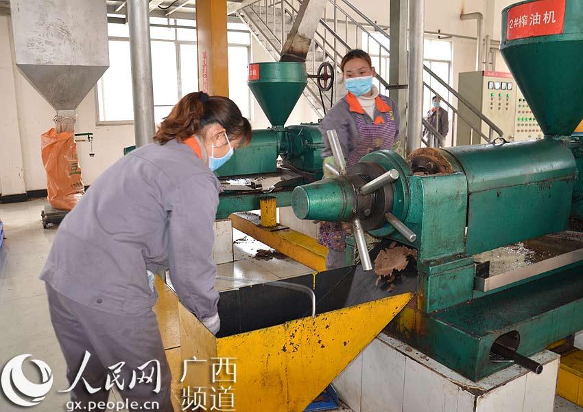 结构调整,把发展油茶产业作为农村经济的主导产业