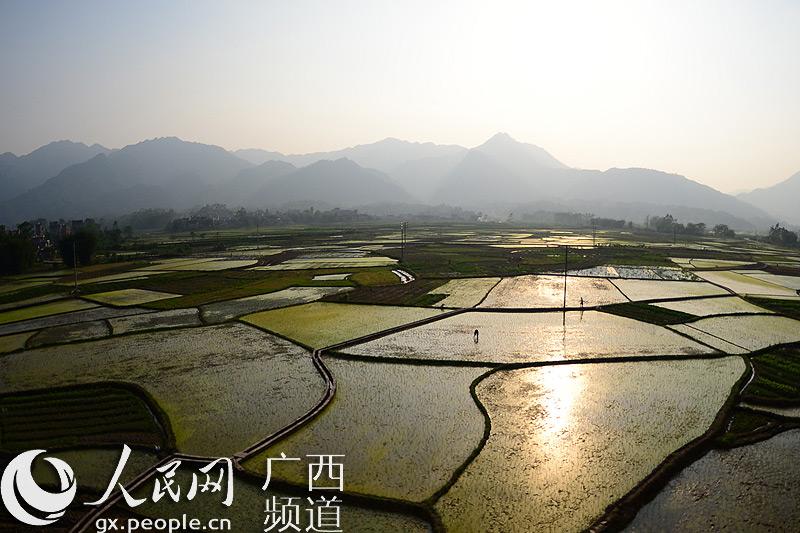 """高清组图:广西瑶乡""""七彩田园""""美如画"""
