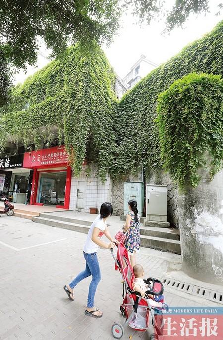 楼外布满各种植物 这样一座 绿房子 你想拥有吗
