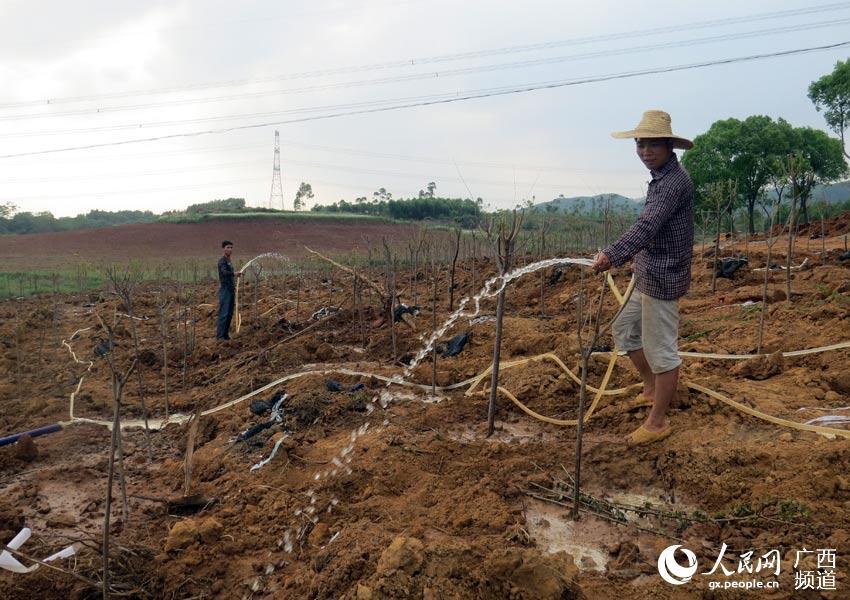 村民们正在给树苗浇水(以上照片均由黄高生摄)