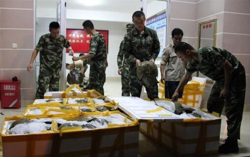 162只国家二级保护动物东方鲎被查获