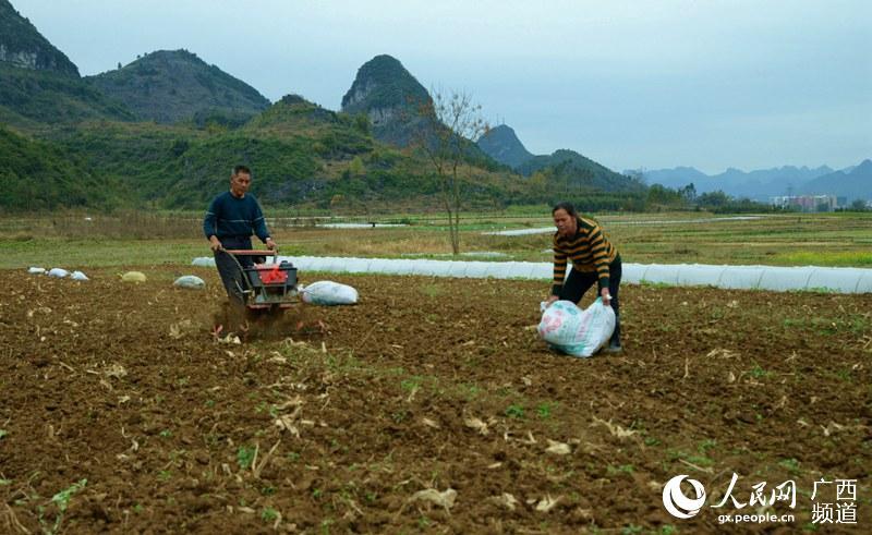 广西来宾市忻城县城关镇板河村村民利用小型农用机械翻耕土地,准备