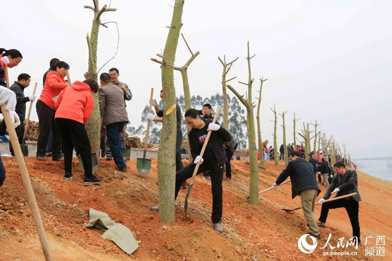 广西融安千名干部植树造林保护生态