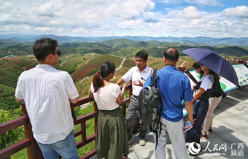 外媒记者在田阳县20万亩农林生态脱贫产业核心示范区进行采访