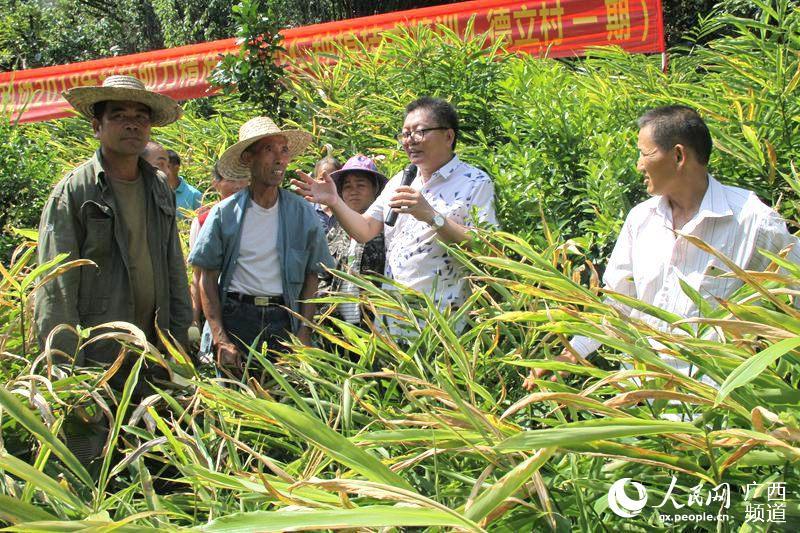 试验示范场专家到大新县桃城镇德立村开展开展砂仁种植管理技术培训
