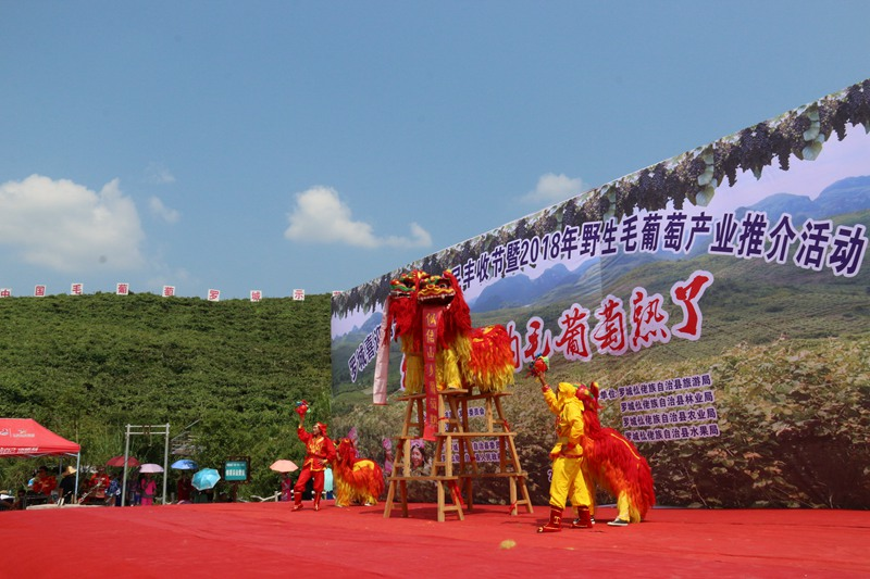罗城喜迎中国农民丰收节