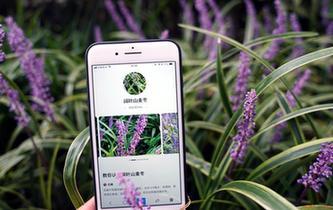 """植物园里体验""""拍照识花"""""""