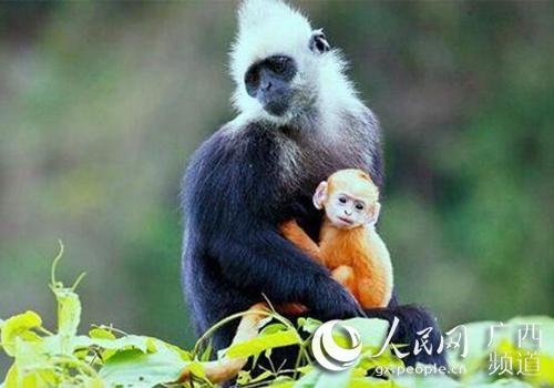 动画片《白头叶猴之嘉猴壮壮》国内首播