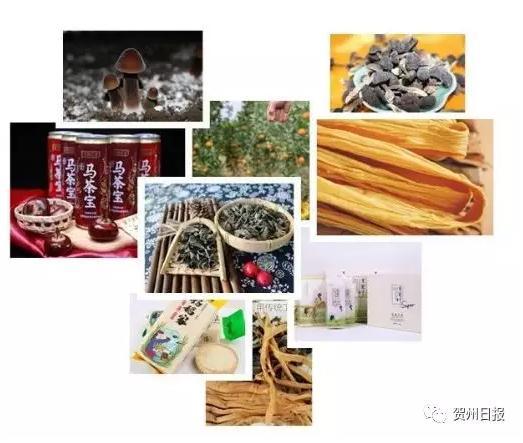 在贺州与贾平凹等名人见面,偶遇知名网红,一起品美食!