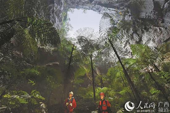 11月上旬,科考队员深入那坡县弄羊天坑进行考察,在天坑底部,发现有完好的原始植被群落。(向航/摄) 人民网南宁11月21日电(沈泉池)近日,自然资源部中国地质调查局专家公布了对广西那坡县的地质遗迹调查结果:11月1日-7日,中国地质调查局地质科学院岩溶研究所专家率队对那坡县进行了一次全面科考,确认当地天坑数量达19个,仅次于世界最大的天坑群乐业大石围天坑群。那坡天坑群的发现,进一步确立了广西作为天坑王国的地位,具有重要的地质研究价值和旅游开发价值。 那坡县位于广西西南边陲,是广西乃至全国通往东盟贸
