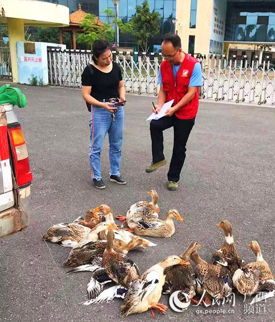 2019年11月15日,廖熙元又帮村民销售一批土鸭。
