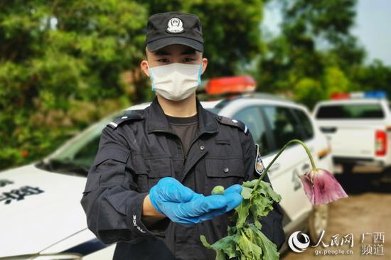 非法种植罂粟难逃法网警方及时依法查处销毁