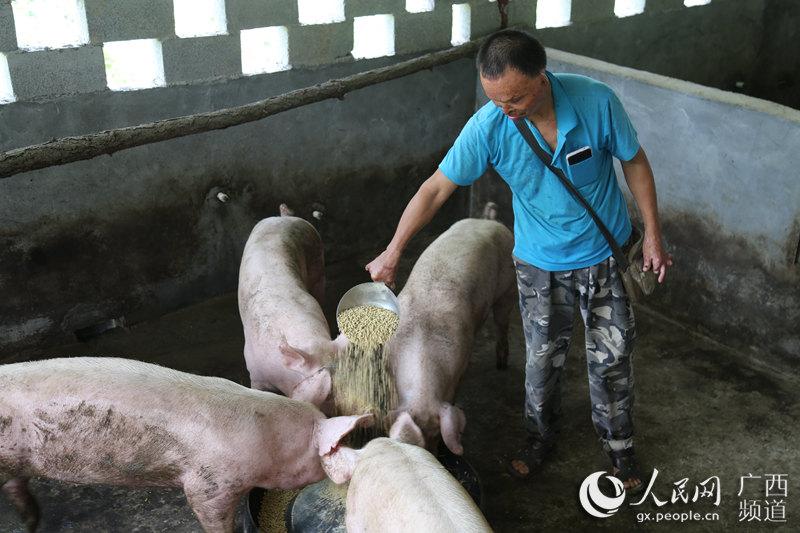 廣西靈山:落實獎補政策 產業脫貧加速度