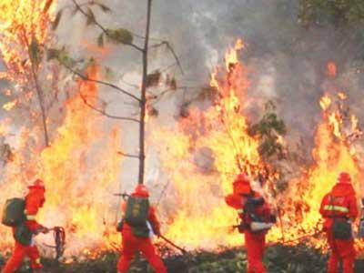 广西森林消防队伍演练举行; 森林消防队员正在演习现场灭火; 广西森林图片