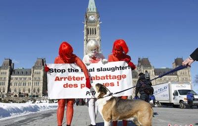 三名善待动物组织成员将身体彩绘成加拿大国旗图案和
