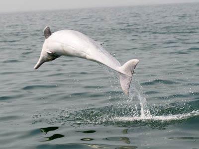 中华白海豚起舞迎宾客--人民网广西频道--人民网